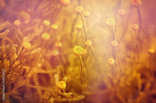 Fototapety, obrazy: Beautiful yellow flowers and sunlight
