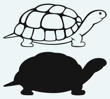 Sea Turtle Isolated On Blue Ba...