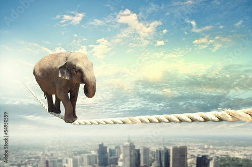 Fotobehang Olifant Elephant walking on rope