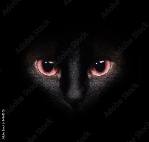 Stampa su Tela Eyes of a wild black siamese cat hiding in the darkness