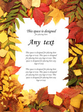 A Bright And Colorful Autumn Frame Of Fallen Leaves