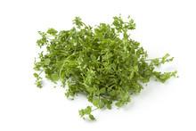 Fresh Green Chickweed