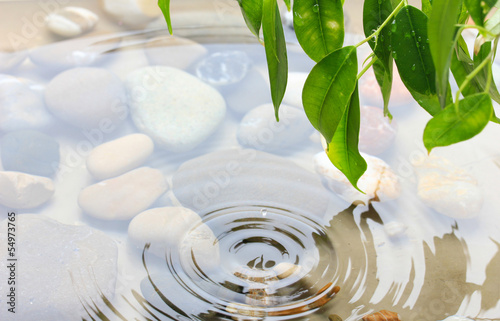 zielone-liscie-i-gladkie-kamienie-z-odbiciem-w-wodzie