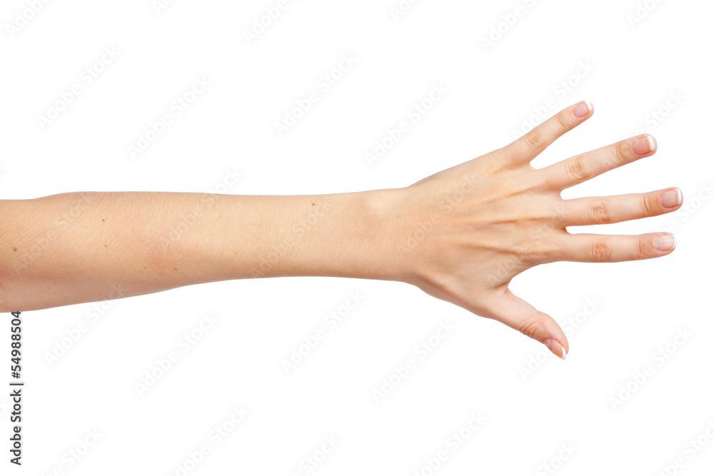 Fototapeta Female hand isolated on white background