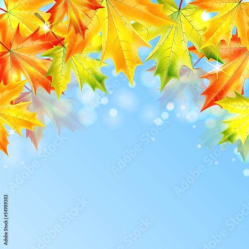 autumn-klonowe-listowie-na-niebieskim-tle-musujace-jesien-tla