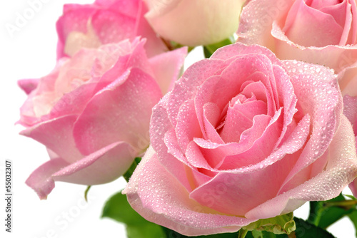 Fototapeta Śliczne mokre róże obraz