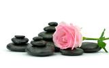Fototapeta Kamienie - Róża z kamieniami do spa na białym tle