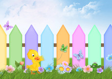 Duckling With Picket Fence