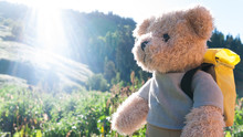 Teddy Bear Hiking