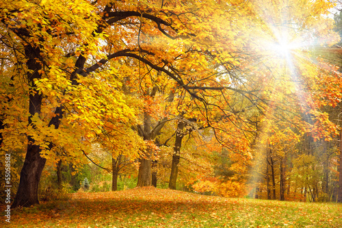 Ingelijste posters Herfst Gold Autumn with sunlight / Beautiful Trees in the forest