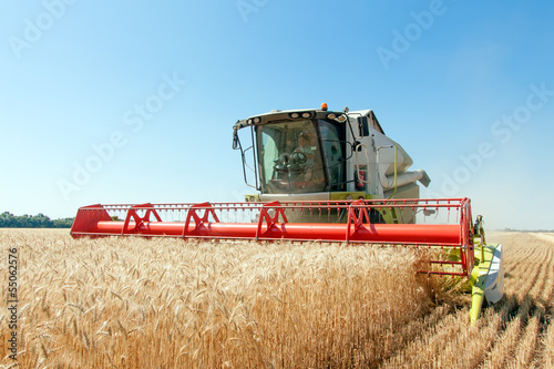 Fotografia  Combine harvests wheat on a field in sunny summer day