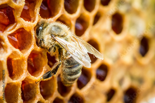 Photo sur Toile Bee Close up of bees in a beehive on honeycomb