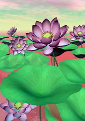 Panel Szklany Kwiaty Pink waterlilies and lotus flowers - 3D render