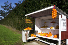 Honor Store Farm Stand