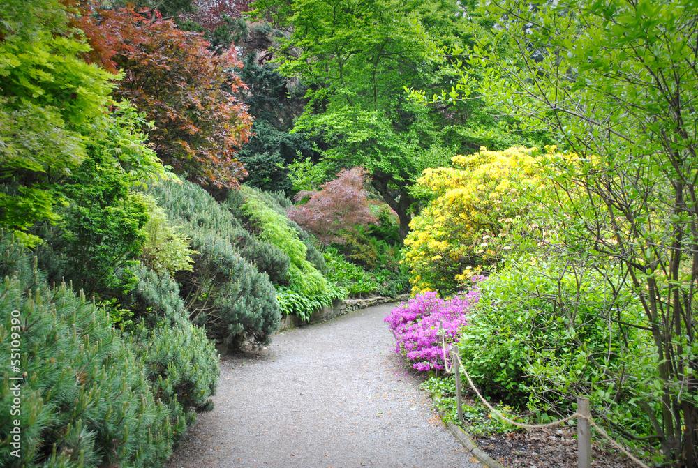 Fototapeta ogród pełen zieleni