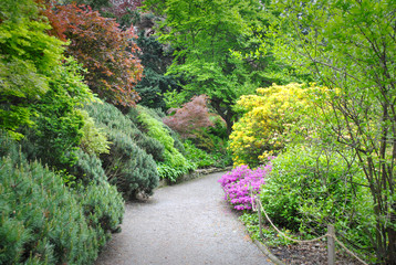 ogród pełen zieleni