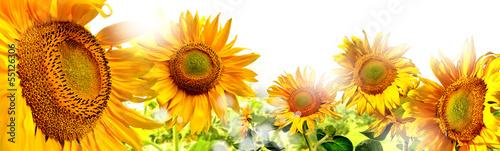 Fotobehang Zonnebloem kwiaty