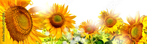 Foto op Canvas Zonnebloem kwiaty