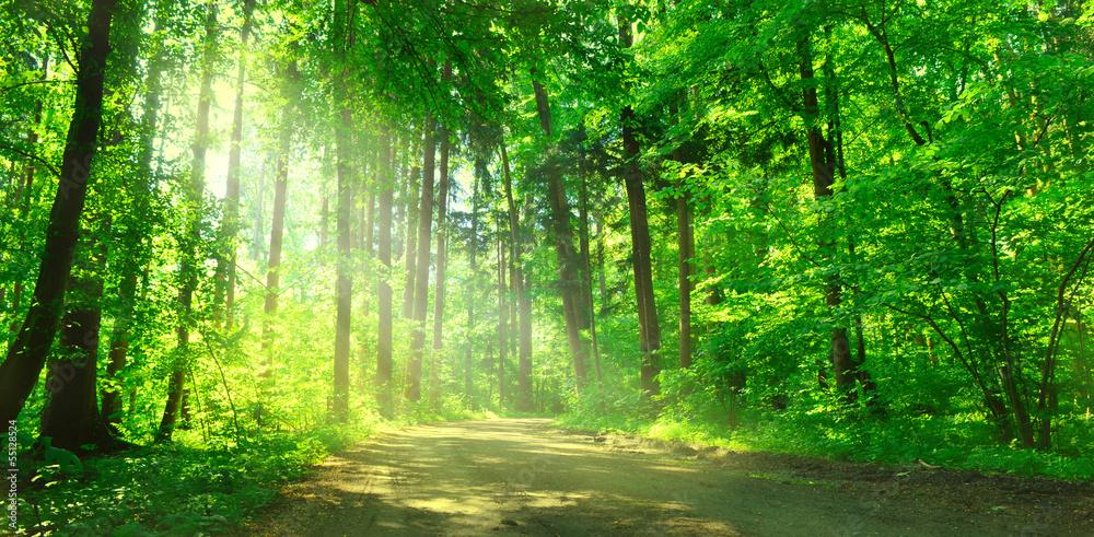 Fototapeta Waldweg mit Sonnenschein