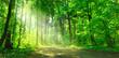 Leinwandbild Motiv Waldweg mit Sonnenschein