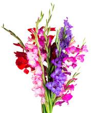 Multicolored Flowers Gladiolus