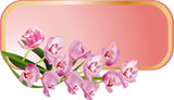 isolated frame with pink orchids