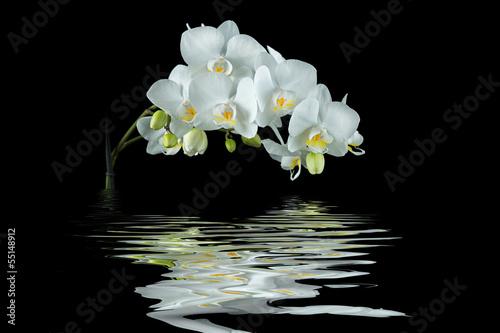 Aluminium Prints Orchid Weiße Orchidee mit Spiegelung auf schwarzem Hintergrund