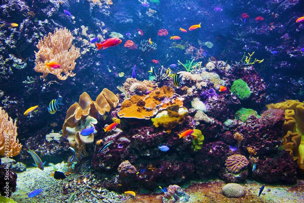 Fototapety, obrazy: Podwodna scena z rybami, rafa koralowa