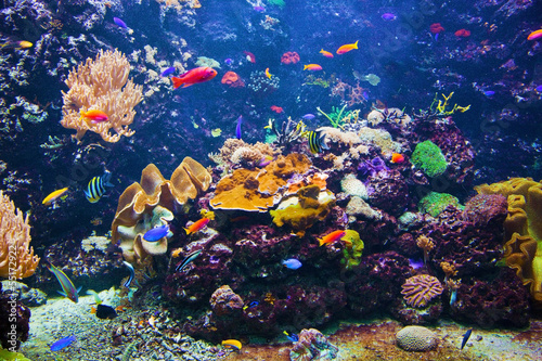 Photo Stands Coral reefs Underwater scene with fish, coral reef