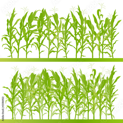 Corn field detailed countryside landscape illustration backgroun Fototapet