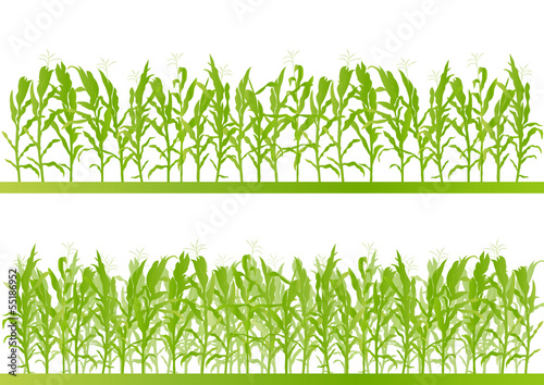Leinwand Poster Corn field detailed countryside landscape illustration backgroun