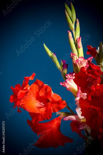 Fotomural flowering gladioli