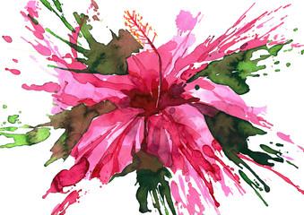 Fototapeta Abstrakcja hibiscus flower