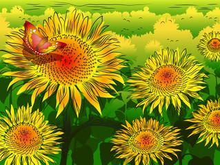 Panel Szklany Do pokoju dziewczyny Sunflower background with butterfly