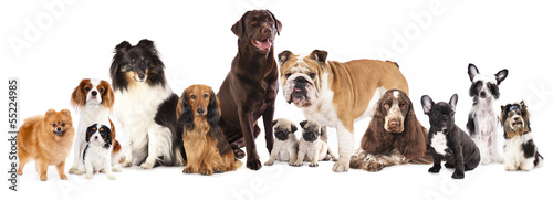 Fényképezés  Group of  dogs sitting in front of a white background