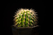 Cactus On Black Background