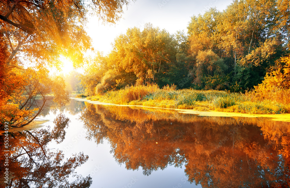 Fototapeta River in a delightful autumn forest