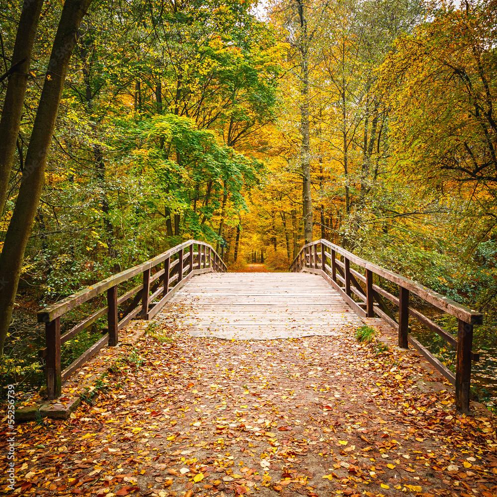 Most w lesie jesienią <span>plik: #55256739 | autor: sborisov</span>