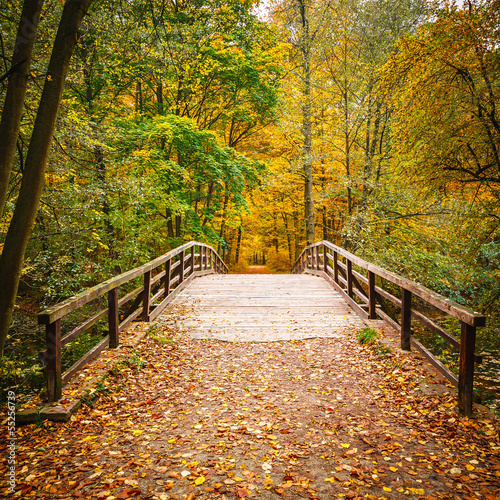 Poster Bruggen Bridge in autumn forest