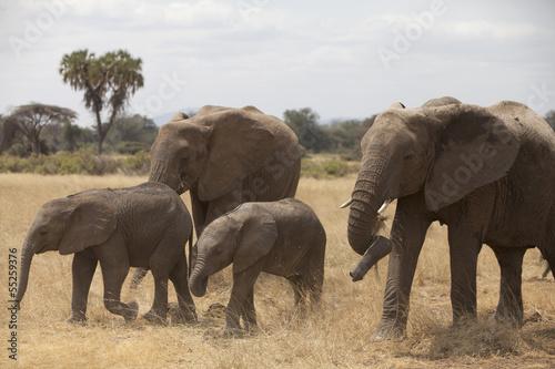 Foto op Plexiglas Afrika Familiar herd of elephants with palm on background