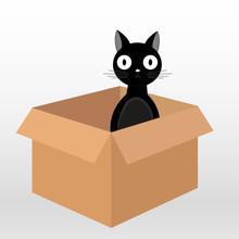 Black Cat In Box