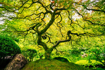 FototapetaAmazing Green Tree