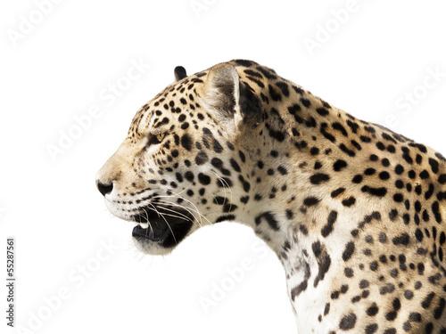 Poster Leopard Predator