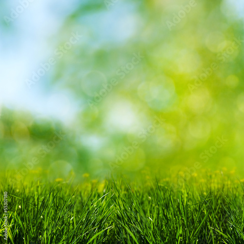 Keuken foto achterwand Lente Green grass on the meadow, environmental backgrounds