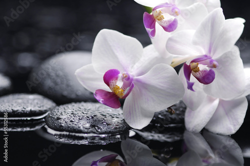Fotobehang Orchidee Branch white orchid flower and stone with water drops