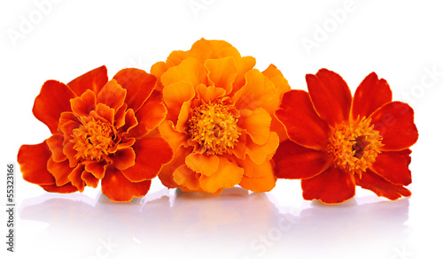 Foto op Canvas Madeliefjes Marigold flowers isolated on white