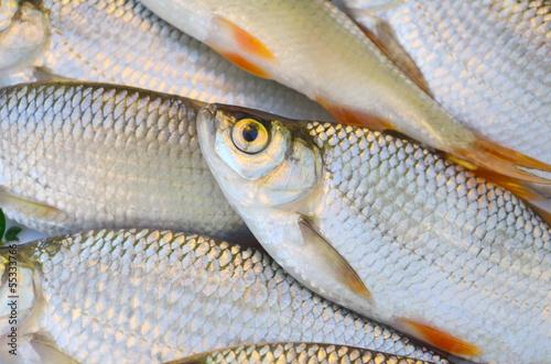 Fotografie, Obraz  Świeże ryby