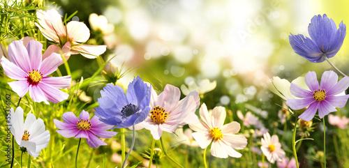 Fotomural kwiaty