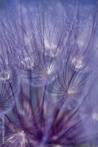 Keuken foto achterwand Paardebloemen en water Abstract colorful dandelion seeds with shallow depth of field