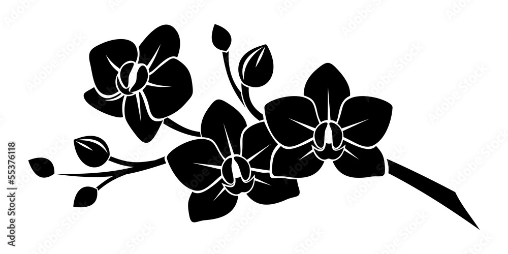 Fototapety, obrazy: Black silhouette of orchid flowers. Vector illustration.